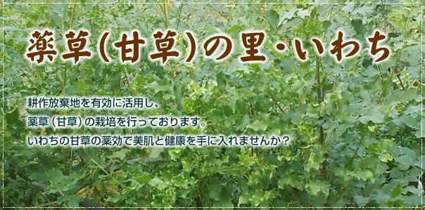 薬草(甘草)の里・いわち。耕作放棄地を有効に活用し、薬草(甘草)の栽培を行っております。いわちの甘草の薬効で美肌と健康を手に入れませんか?